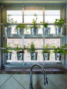 window_garden